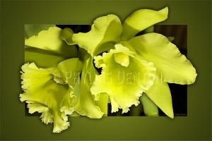 Very Green Orchids